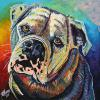 "Bulldog, 16"" x 16"", acrylic on canvas"