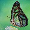 "Malachite Butterfly, 16"" x 16"", acrylic on canvas"